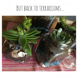 But back to terrariums...